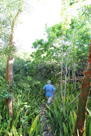 Everglades Backcountry Experience with Capt. Rodney Raffield: Capt. Rodney leading the way through an ancient Calusa indian island built entirely of shells!