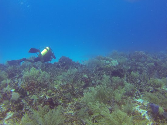 Doctor Dive Costa Maya: 4