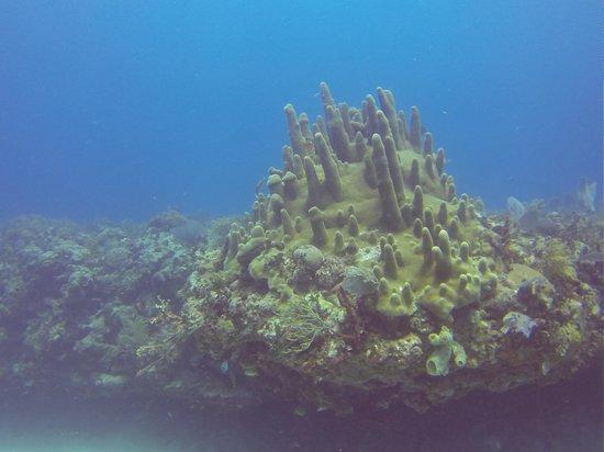 Doctor Dive Costa Maya: 1
