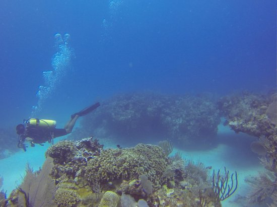 Doctor Dive Costa Maya: 3