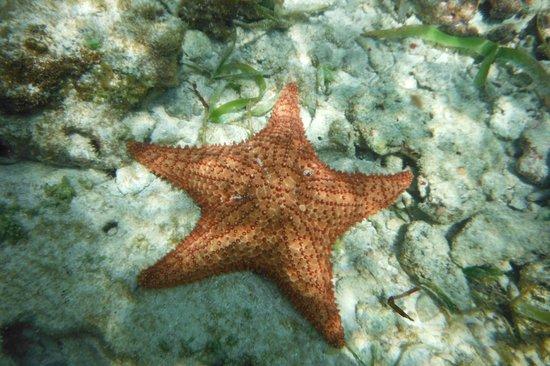 Luxury Bahia Principe Cayo Levantado Don Pablo Collection: Pour l'apnée pas bcp de poissons mais étoiles de mer et ....pleins de petits oursins noirs ATTEN