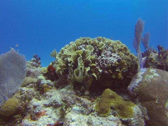 Doctor Dive Costa Maya: 2