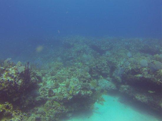 Doctor Dive Costa Maya: 5