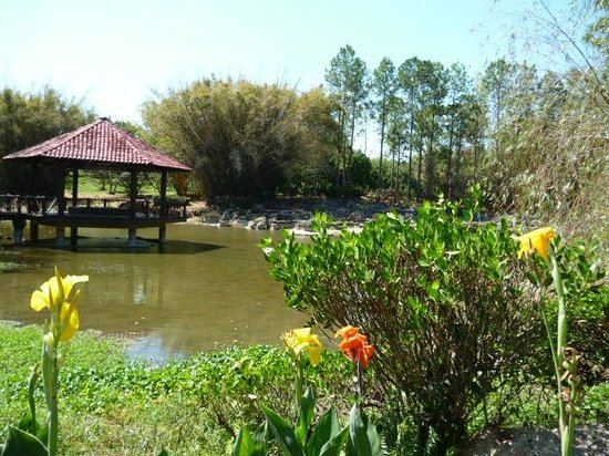 Cactus picture of jardin botanico nacional havana for Jardin botanico nacional