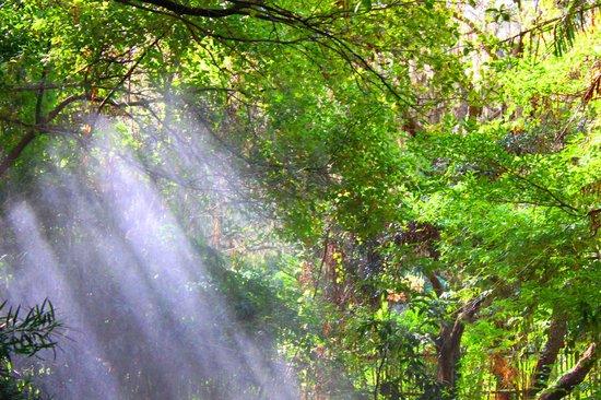 University of Florida : trees and shades