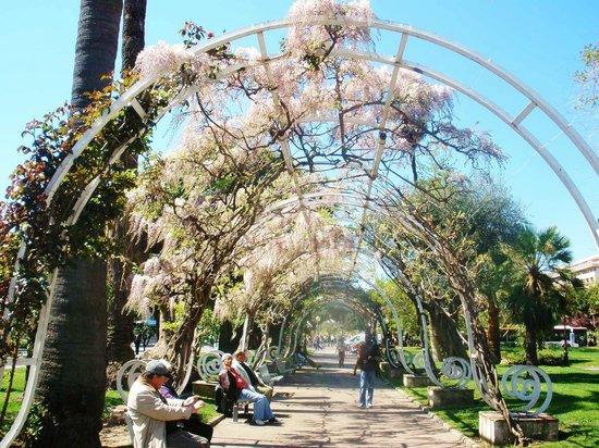 Cool mist 02 picture of le jardin albert 1er nice for Jardin nice