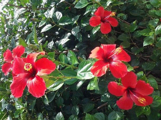 Memories Paraiso Azul Beach Resort: beautiful flowers everywhere!