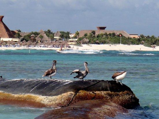 Luxury Bahia Principe Sian Ka'an: Life...