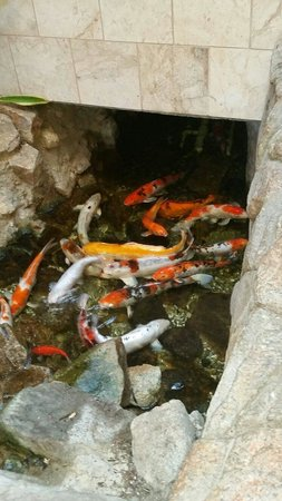 Embassy Suites by Hilton Hotel Monterey Bay - Seaside: Relax by the Koi fish stream.