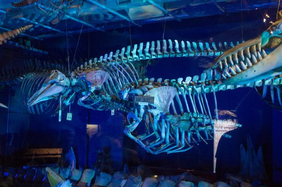 Te Papa Tongarewa (Museum of New Zealand): Whale exhibit at Te Papa Tongarewa