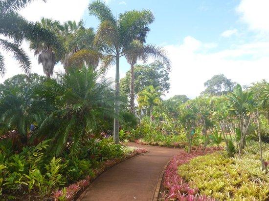 Dole Plantation : Plantation