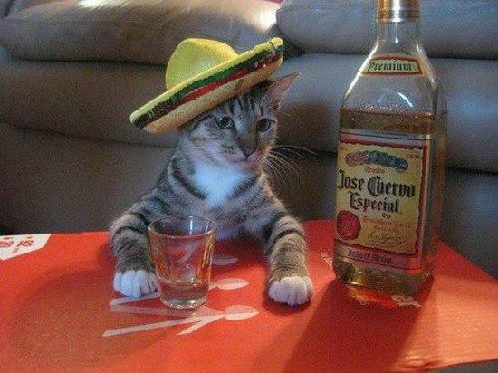 Cactus Jacks Cannon Park Townsville: Tequila!