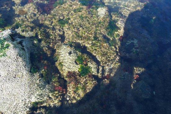 St. Kilda Beach: Small tidal pool