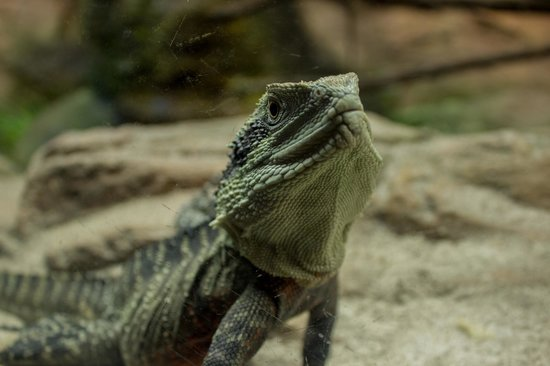 National Aquarium: Get up close and personal with some new scaly friends.