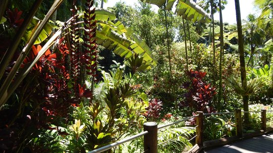 Hawaii Tropical Botanical Garden: Lush garden foliage