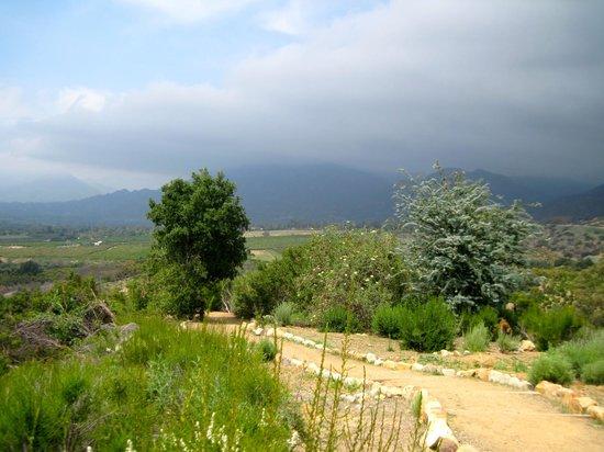 Meditation Mount