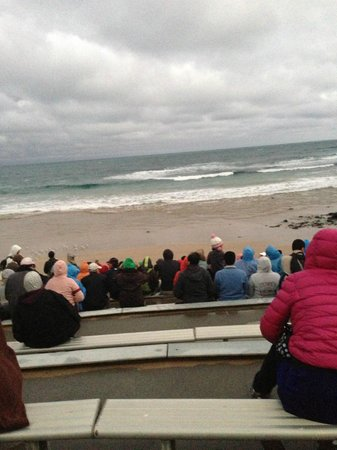Phillip Island Nature Parks - Penguin Parade: Sitting outside on the beach waiting for the penguins.