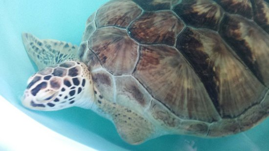 Sea Turtle, Inc.: :(