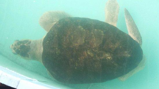 Sea Turtle, Inc.: 20 year old