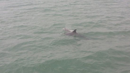 South Padre Island Dolphin Research & Sea Life Nature Center: :)