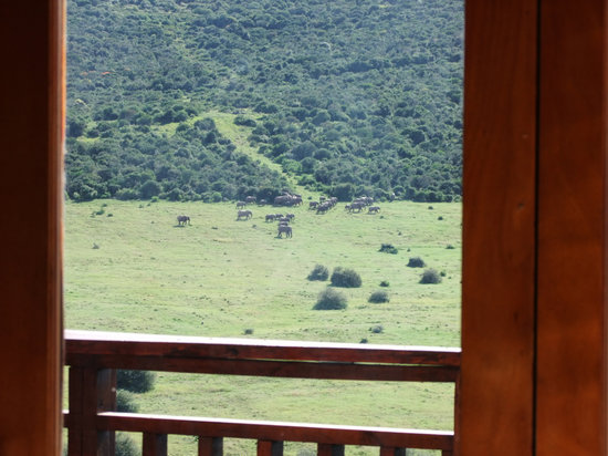 Addo Afrique Estate: View from your bed in the Tranquillity (Honeymoon) suite.