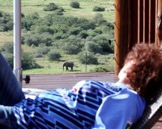 Addo Afrique Estate: Relaxing in the sun.