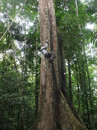 Tambopata Research Center : Tree Climbing