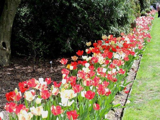 Fellows Riverside Gardens: more tulips