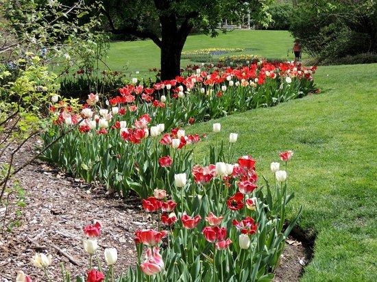 Fellows Riverside Gardens: winding path of tulips