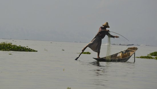 Inle Lake: The fisherman almost a dancing act