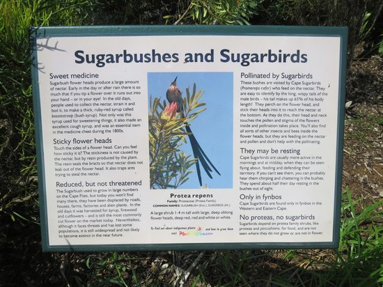 Kirstenbosch National Botanical Garden: Information sign