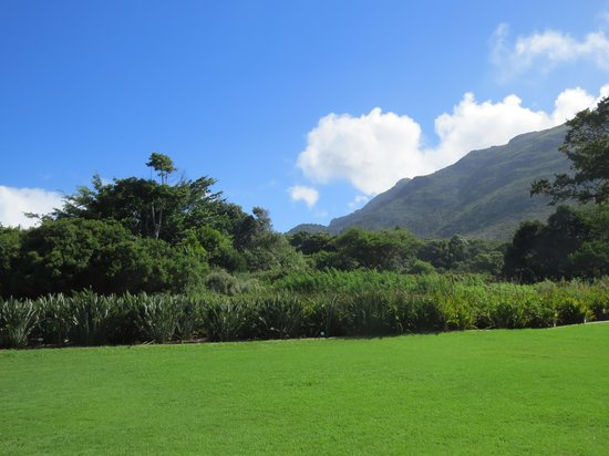 Kirstenbosch National Botanical Garden: A view of the gardens