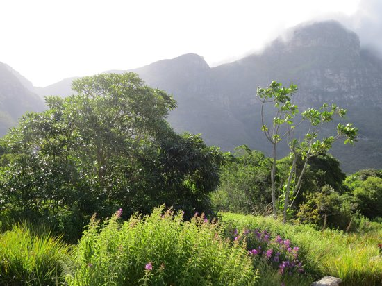 Kirstenbosch National Botanical Garden: A view towards the mountain