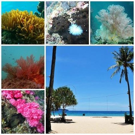 Ko Libong, Thailand: บริเวณเกาะมุก