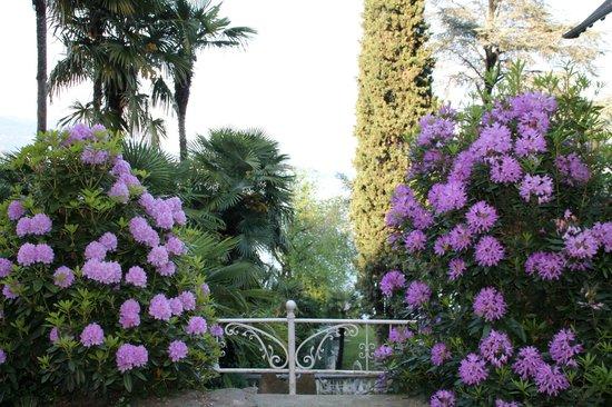 Hotel Villa Ruscello: Giardino