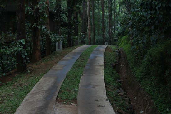 The Tamara Coorg: Steep slope , where approximately 56 cottages & suites built on stilts raised from the s