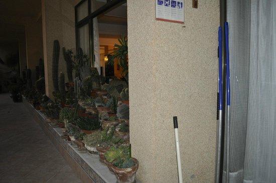Isla del Sol: еще кактусы у бассейна и ресторана