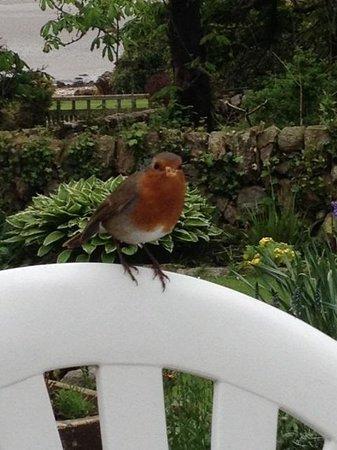 Coastal Kippford: Friendly robin at Rockcliffe Tea Rooms