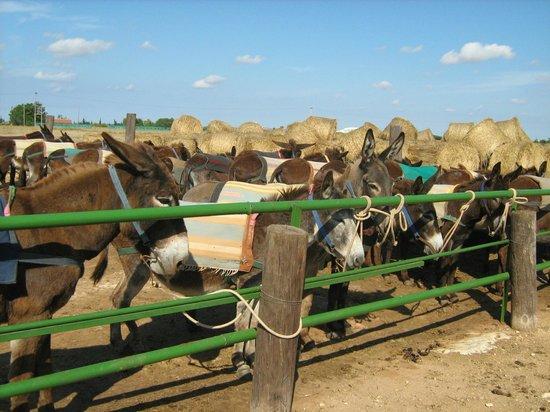 Donkey Sanctuary: ослики
