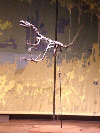 Tellus Science Museum : Dino