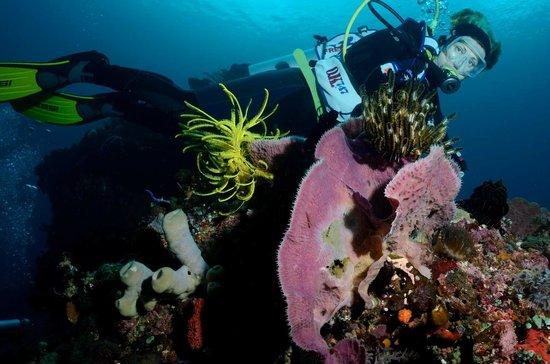 Alor Divers Eco Resort: GIUSY