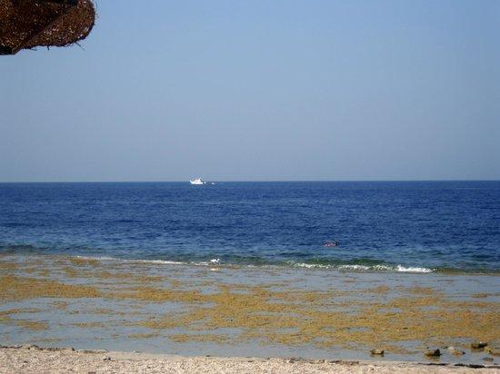 Coral Hills Resort Marsa Alam: Море