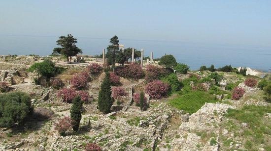 Château de Byblos : Территория комплекса