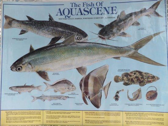 Aquascene : Fish