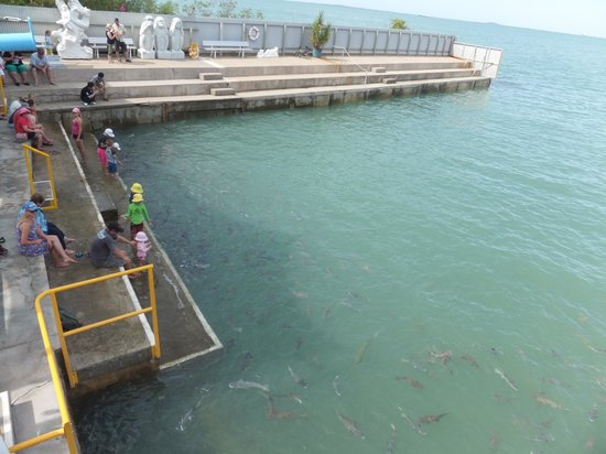 Aquascene : Feeding 3