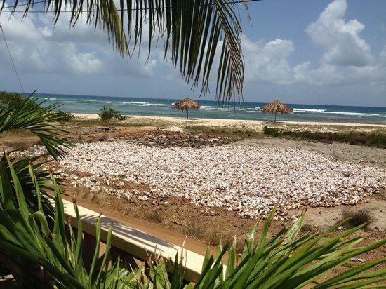 The Islander's Inn: la plage