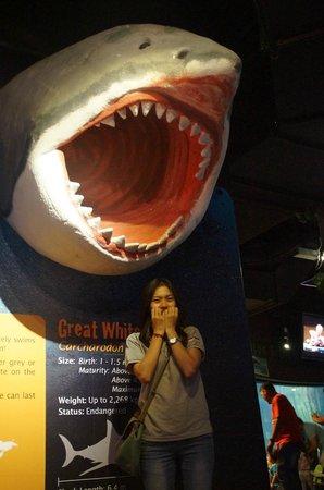 Aquaria KLCC : White Shark