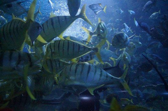 Aquaria KLCC: Feeding Fishes