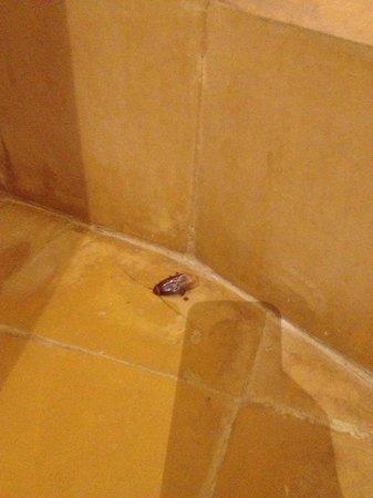 Kasbah Hotel Tombouctou: cafard dans la douche