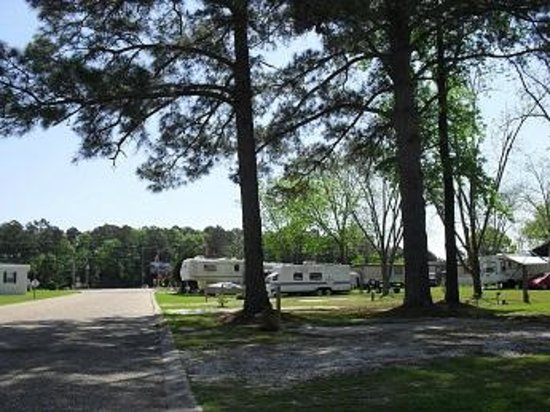 Cherry Blossom RV & Mobile Home Park : Cherry Blossom RV Park Grounds